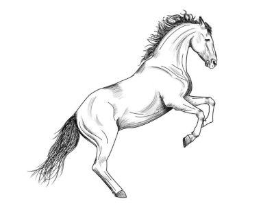 significado caballos